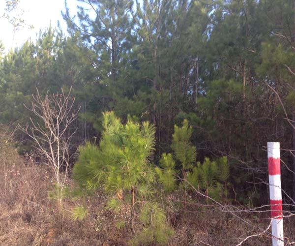 Southern Land Services Tallahassee, Thomasville and Bainbridge